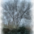 Winter Trees by Donald S Hall