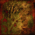 Winter Trees In Gold And Red by Sheryl Karas