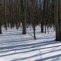 Winter Trees In Snow With Shadow Lines by Adam Long