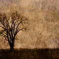 Winter Trees In The Bottomland 1 by Greg Matchick
