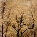 Winter Trees In The Bottomlands 2 by Greg Matchick