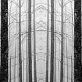 Winter Trees by Joye Ardyn Durham