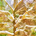 Winter Trees On Snow 2 by Jeelan Clark