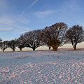Winter Trees On The Ring by Hazy Apple