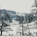 Winter Trees Solitude Landscape by Pati Photography