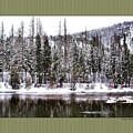 Winter Trees by Susan Kinney