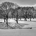 Winter Trees by Wayne Marshall Chase