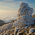 Winter  by Tsoncho Balkandjiev