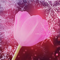 Winter Tulip Red Theme Snow by Johanna Hurmerinta