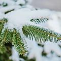 Winter by Viktor Pravdica