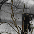 Winter Vines by Dylan Punke