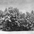 Winter Vintage by Karin Pinkham