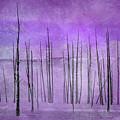 Winter Violet  7913violet by Karen Celella