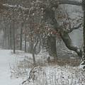 Winter Walk by Dylan Punke