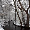 Winter Walk In The Woods by Leonore VanScheidt
