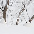 Winter Whites by Tim Grams