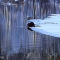 Winter Wildlife In New England by Cheryl Braley