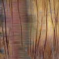 Winter Willows Abstract by Deborah Hughes