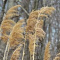 Winter Wind by Jessica Murphy
