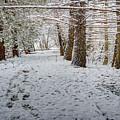 Winter Wonder Land by LeeAnn McLaneGoetz McLaneGoetzStudioLLCcom