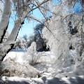 Winter Wonderland  by Cindy Greenstein