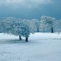 Winter Wonderland by Flavia Westerwelle