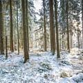 Winter Wonderland by Hannes Cmarits