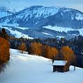 Winter Wonderland In Switzerland - Sunset Light In The Trees by Susanne Van Hulst