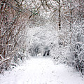 Winter Wonderland by Kyle Hillman