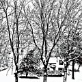 Winter Wonderland by Lori Faircloth