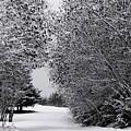 Winter Wonderland by Lori Mahaffey