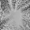 Winter Wonderland  by Rand