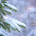 Winter Wonderland by Sharon McConnell