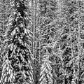 Winter Wonderland  by Yves Gagnon