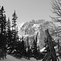 Winter Wonders 3 by Tonya Hance