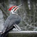 Winter Woodpecker by Bruce Brandli