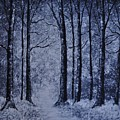Winter Woods Eve by Crystal Miller