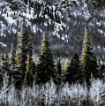 Winter Woods by Garett Gabriel