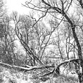 Winter Woods On A Stormy Day 2 Bw by Steve Harrington