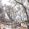 Winter Woods On A Stormy Day 2 by Steve Harrington