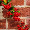 Winterberry 0028 by Dan Beauvais