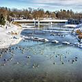 Wintering Geese by Tatiana Travelways