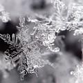 Winter's Beauty by Lauren Radke