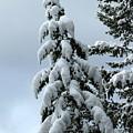 Winter's Burden by Leone Lund