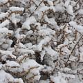 Winter's Contrast by Carol Groenen