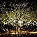 Winters Dawn by Jonathan Garrett