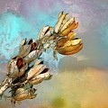 Winters Day Desert Yucca by Barbara Chichester