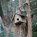 Winter's Empty Nest by J M Farris Photography
