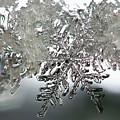 Winter's Glory by Lauren Radke