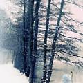Winter's Glow by Jessica Jenney